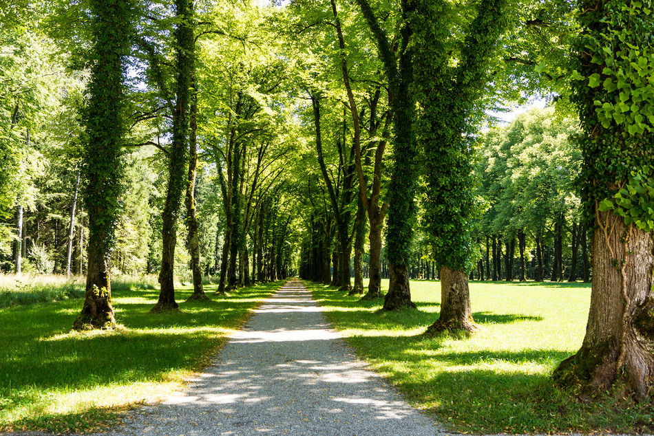 Der Weg Beauty In Nature Branch Day Forest Grass Green Color Growth Landscape Nature No People Outdoors Scenics Shadow Sunlight The Way Forward Tranquil Scene Tranquility Tree Tree Trunk