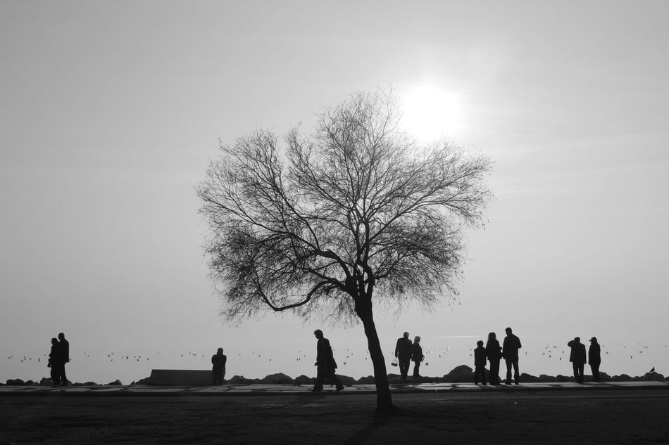 Bw_collection Blackandwhite EyeEm Nature Lover Sun_collection