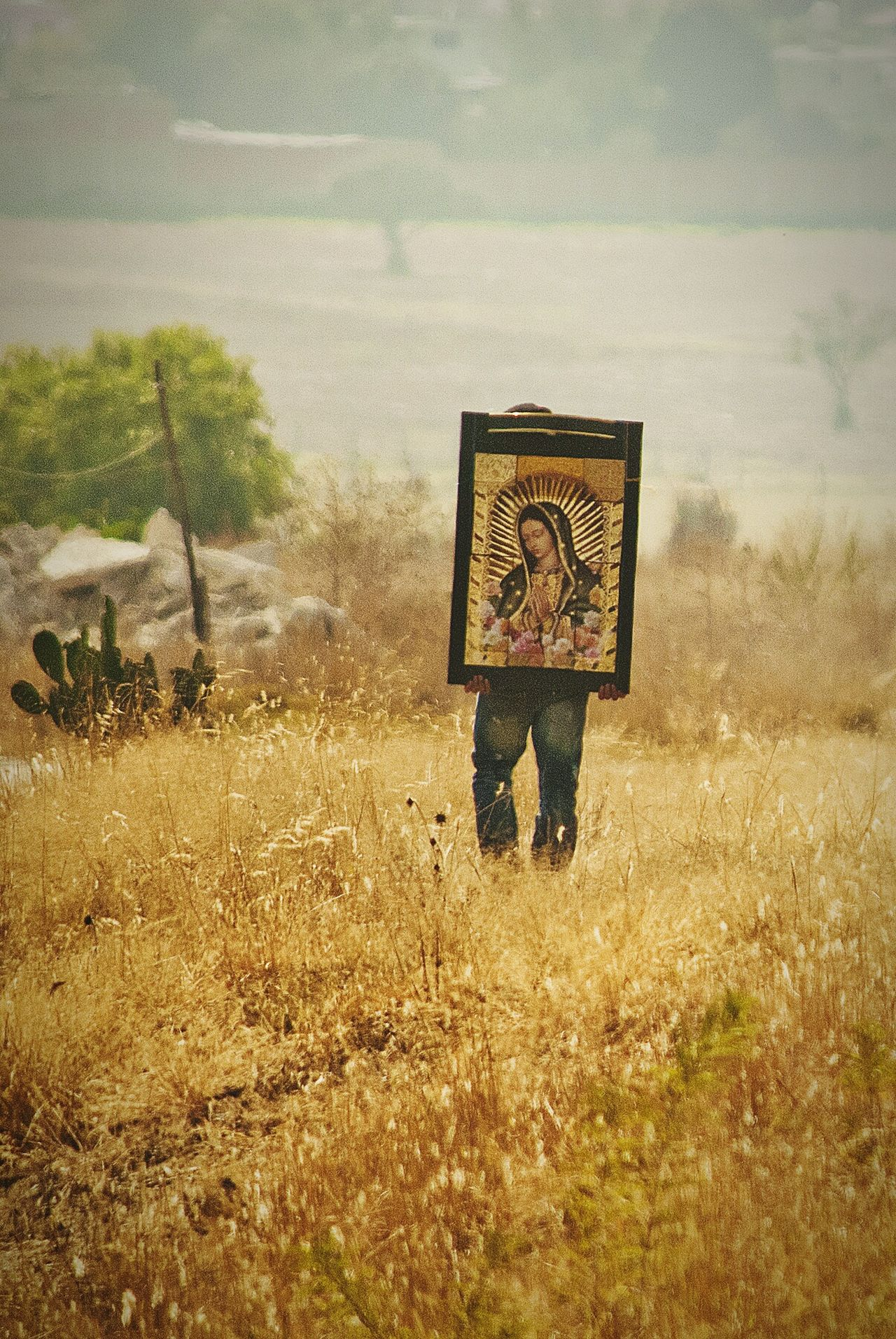 Fields Of Gold Religion And Tradition Religious Images Carry On Walking Walking Alone... Mexico Virgen De Guadalupe Pilgrim Pilgrimage Tree Field Real People One Person Day Grass Outdoors Nature