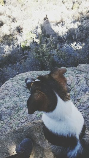 On A Hike Puppy Love ❤ Belongs To Me Selfie Shadow New Mexico, USA Desert Beauty Landscapes With WhiteWall Silhouettes