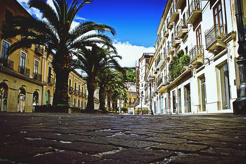 Palms! Italia Followme Taking Photos Canon EOS 600D DSLR