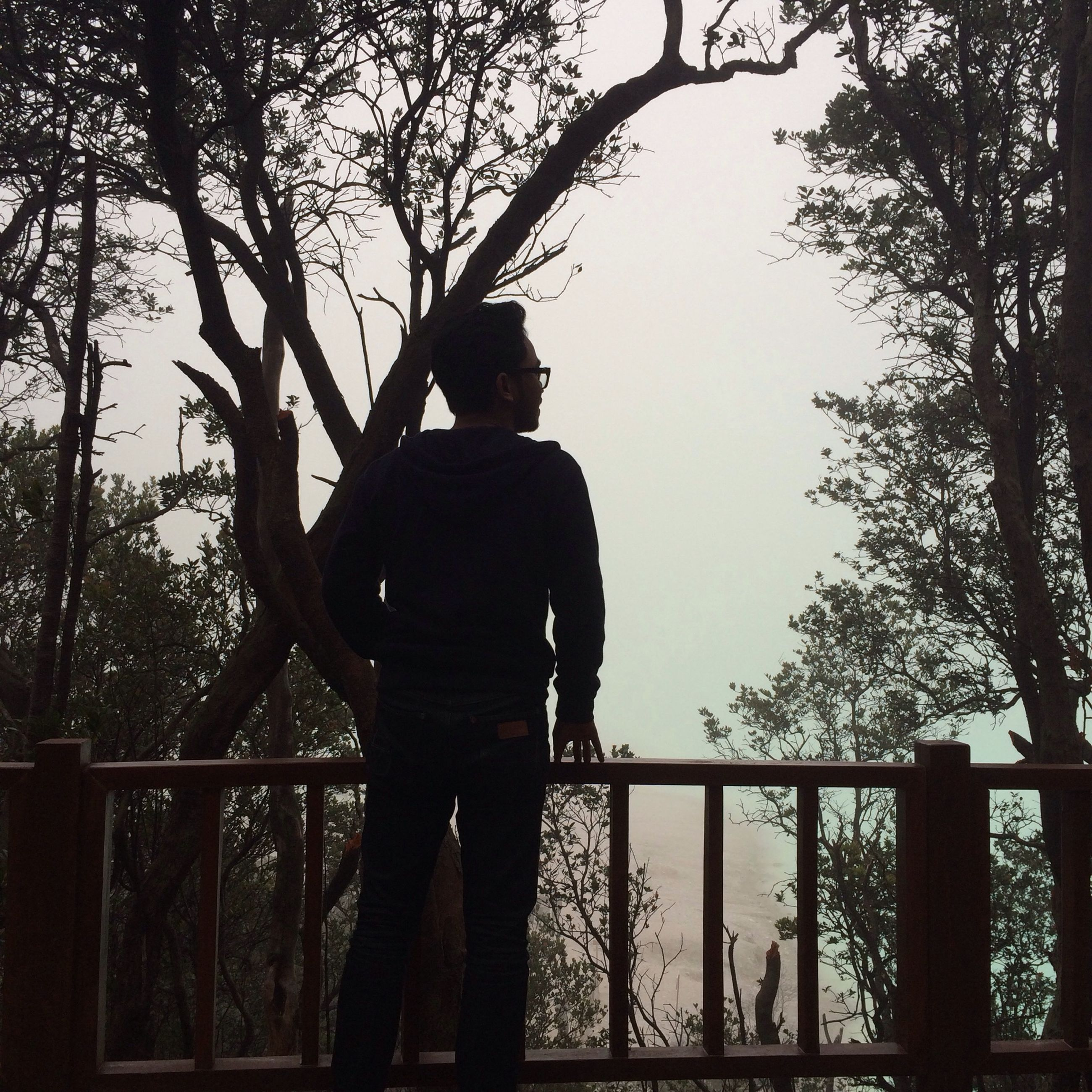 tree, lifestyles, leisure activity, rear view, silhouette, standing, railing, full length, three quarter length, branch, men, clear sky, person, casual clothing, sky, side view, nature, outdoors