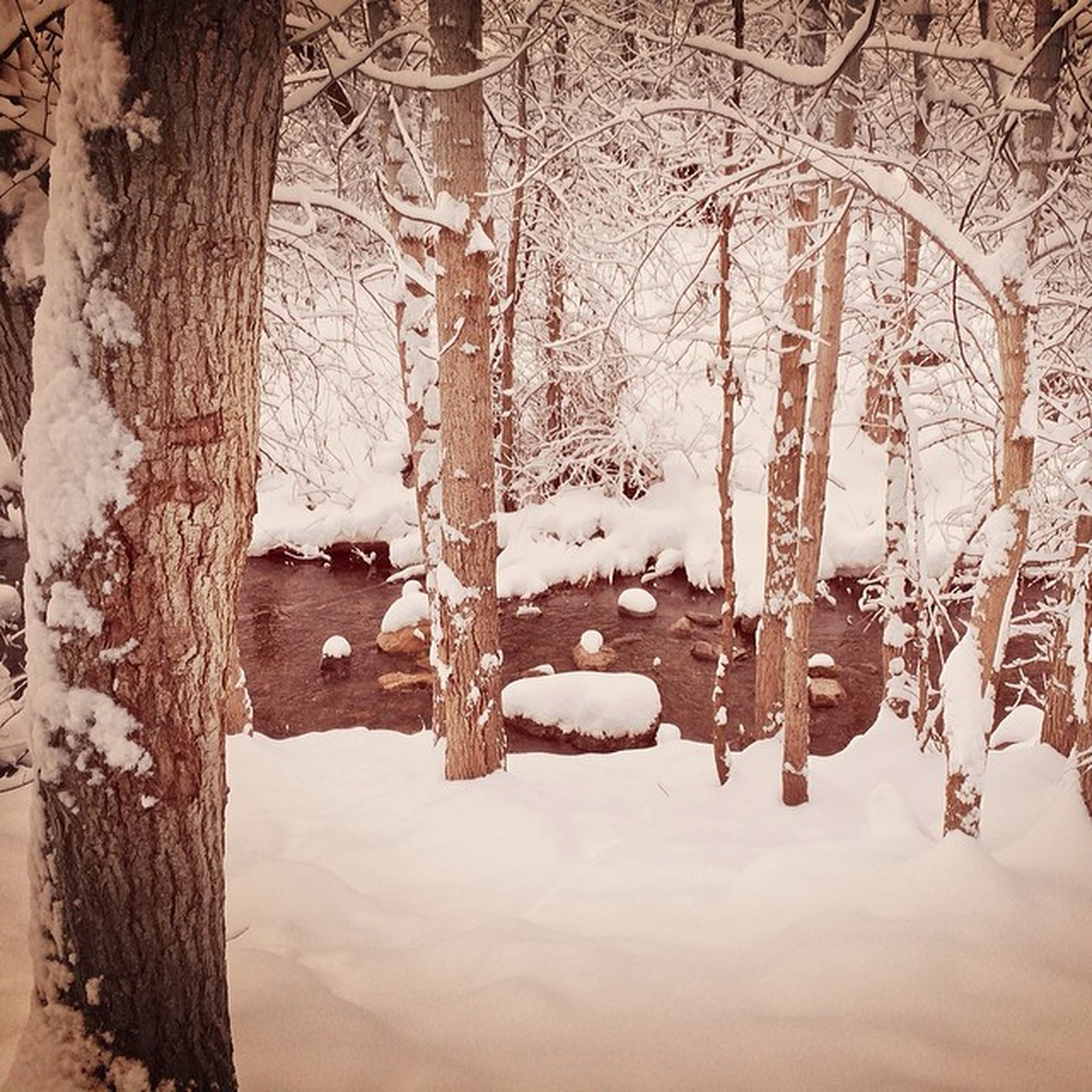 snow, winter, cold temperature, wood - material, tree trunk, tree, old, season, abandoned, built structure, wooden, weathered, indoors, covering, white color, weather, damaged, day, no people, run-down