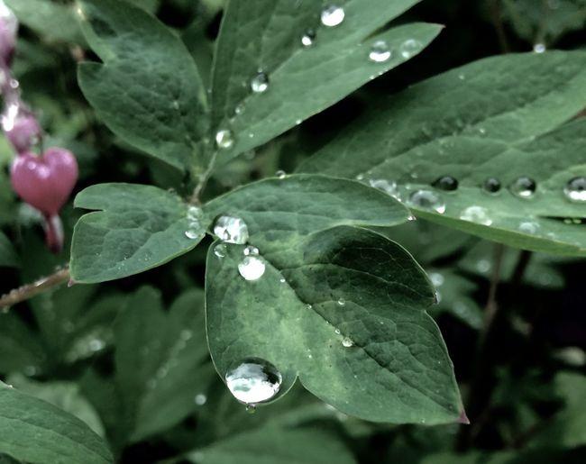 Rain Drops Macro Rain Garden Plants