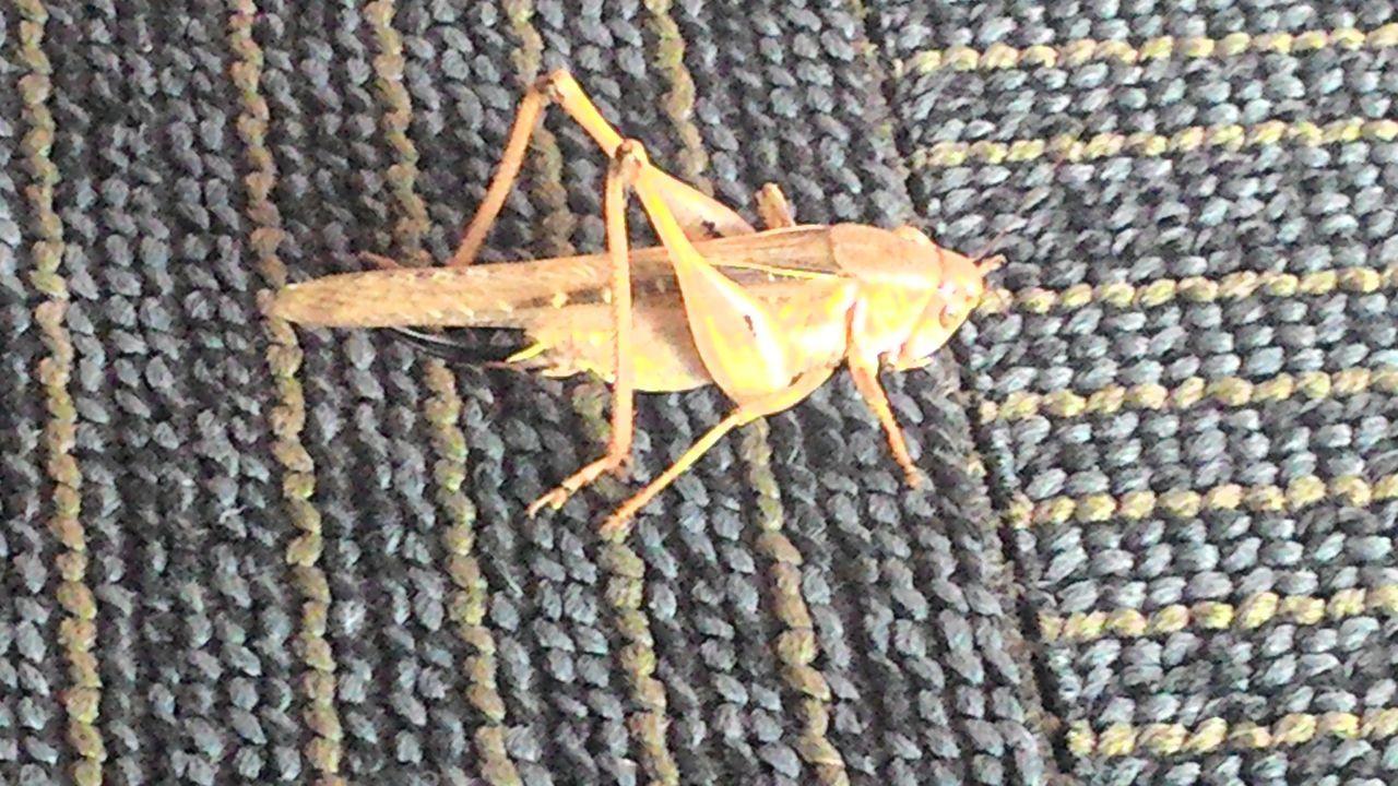 Grasshopper çekirge Amateurphotographer  Olcay Özfırat