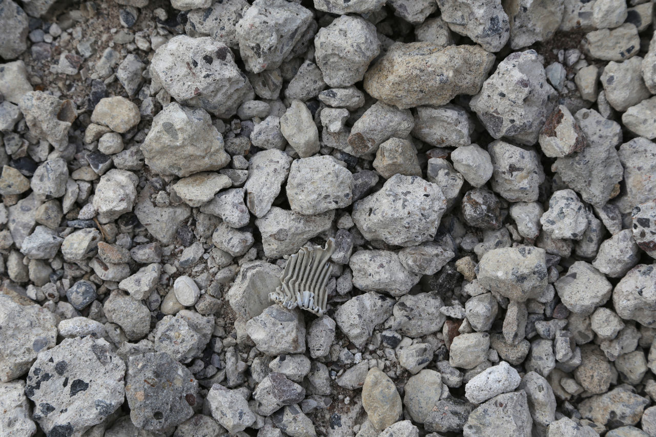 rock - object, no people, one animal, directly above, outdoors, day, animal themes, backgrounds, nature, close-up
