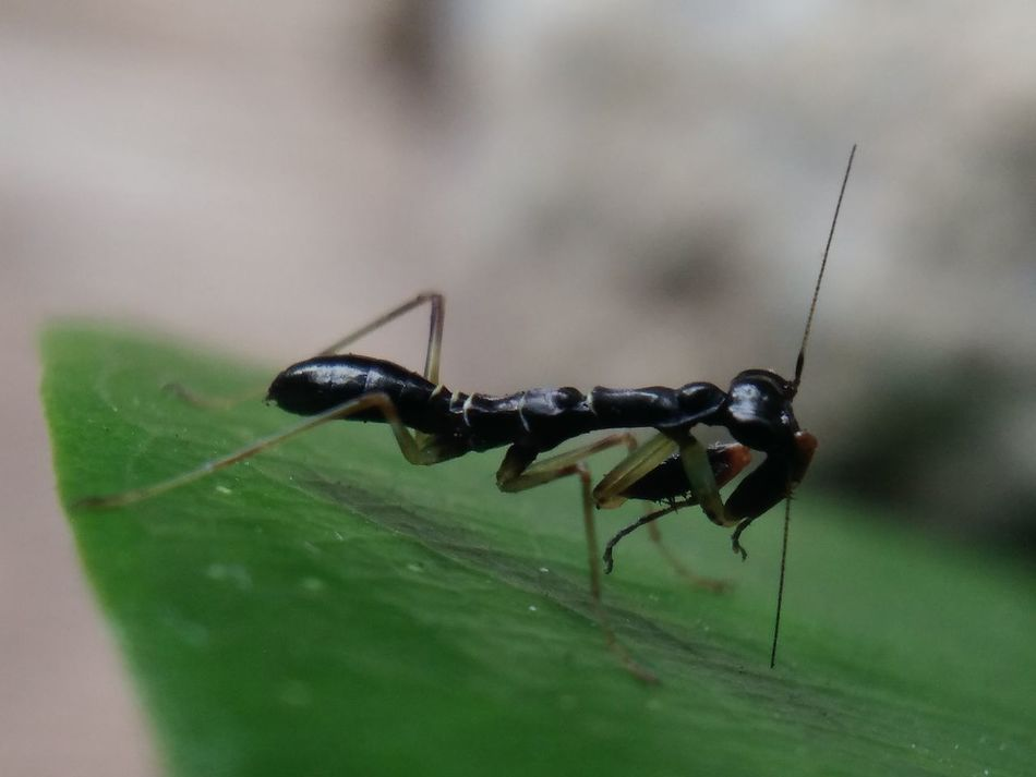 Ant Semut Ant Macro Photography Insect Photography Insect Themes Insect One Animal Animal Wildlife Animals In The Wild Animal Themes Day Close-up