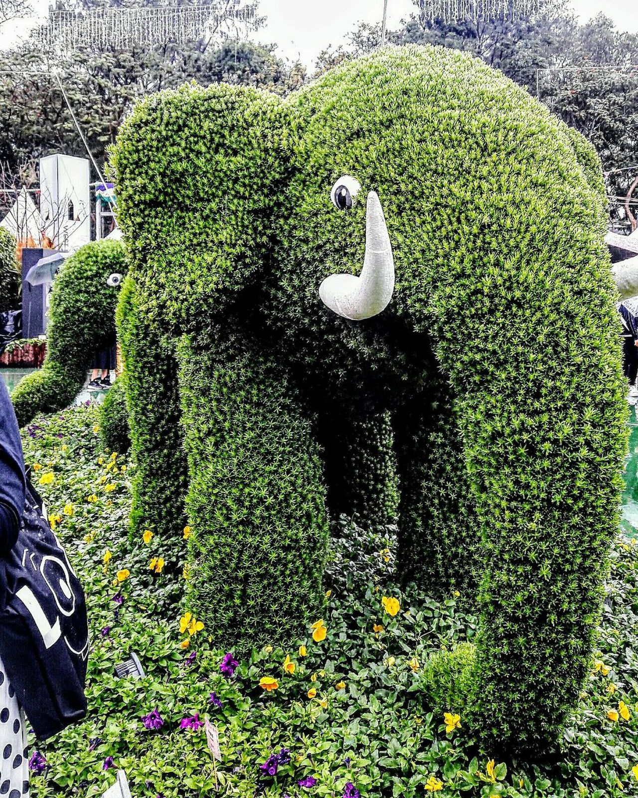 Hong Kong Flower Show 2017 Victoria Park Green Color Growth Plants Outdoors Elephant