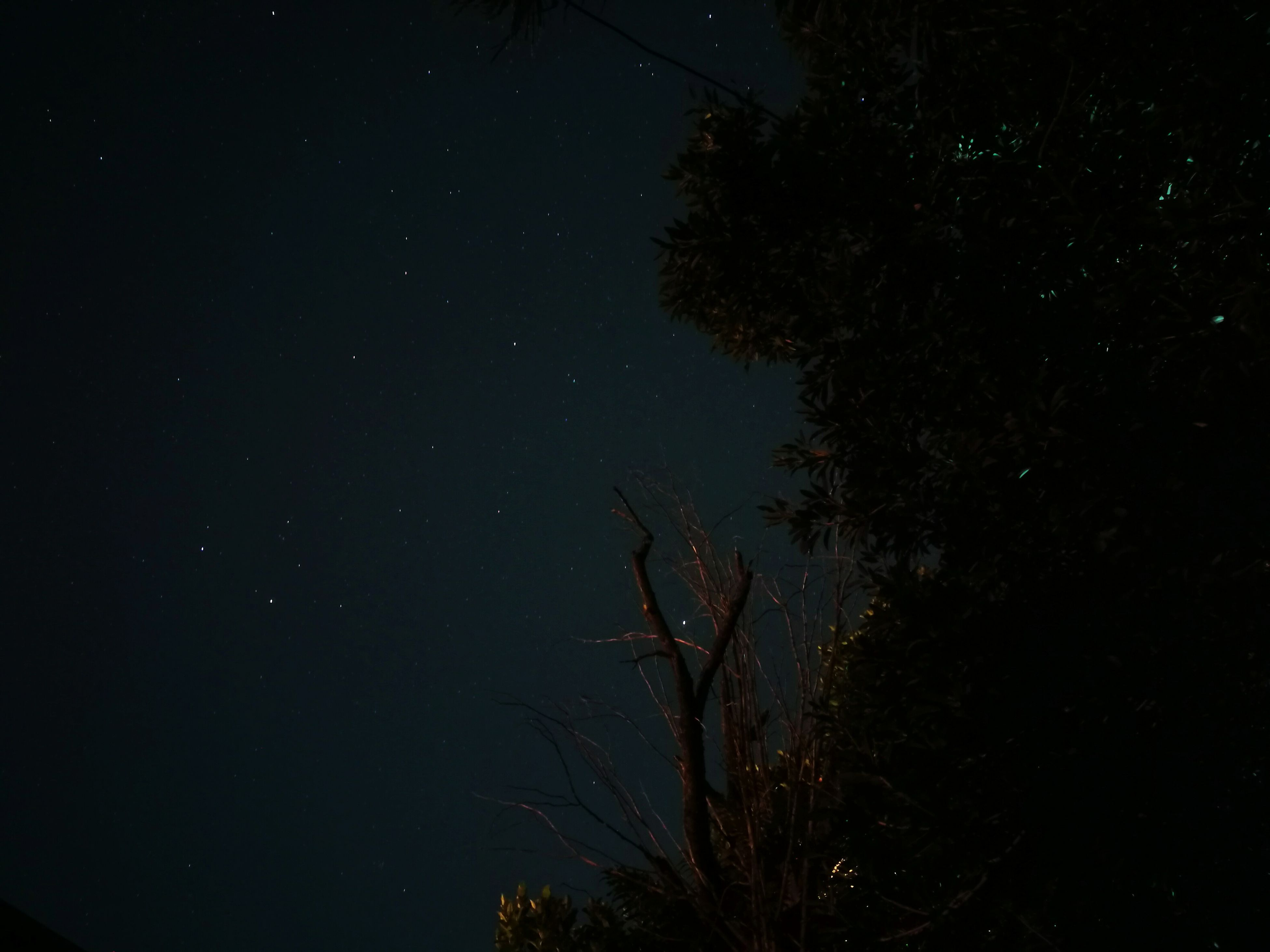 star - space, night, tree, beauty in nature, sky, astronomy, nature, low angle view, scenics, space and astronomy, tranquility, no people, outdoors, branch, star field, galaxy, space