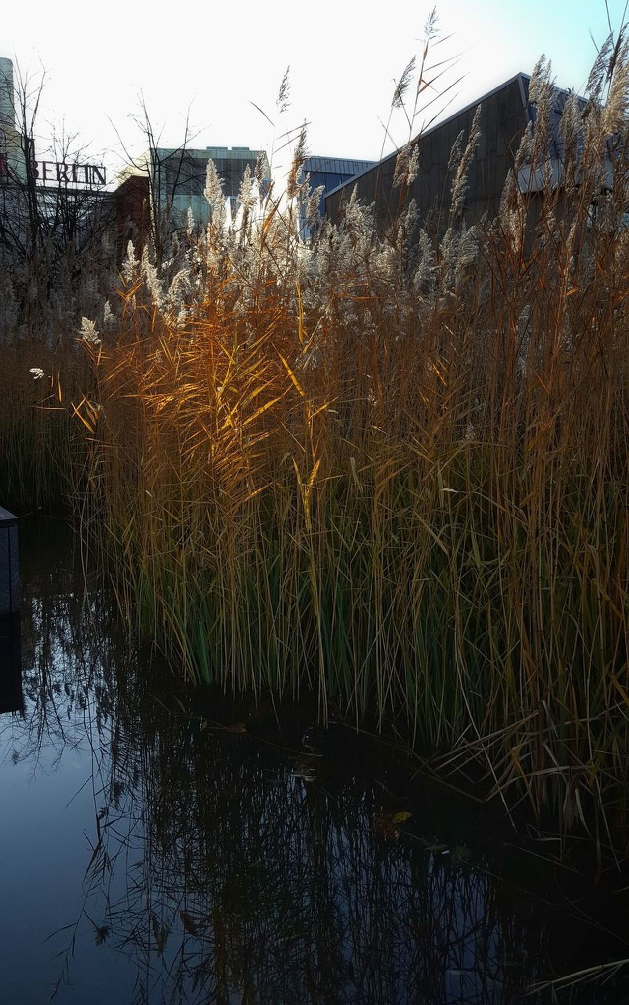 AntiM Berlin Mitte Grass In Water Water Reflections Architecture Beauty In Nature Berliner Ansichten Building Exterior Built Structure Day Grass Growth Lake Nature No People Outdoors Plant Potsdamer Platz Reflection Sky Tranquil Scene Tranquility Tree Water
