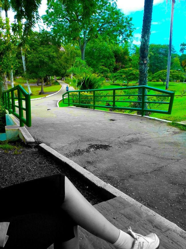 Trinidad And Tobago Botanical Gardens Nature Photography Plants 🌱 Green Color Blackandwhite Dual Tone Leaves🌿 Naturephotography Nature Monochromatic Fitness Training