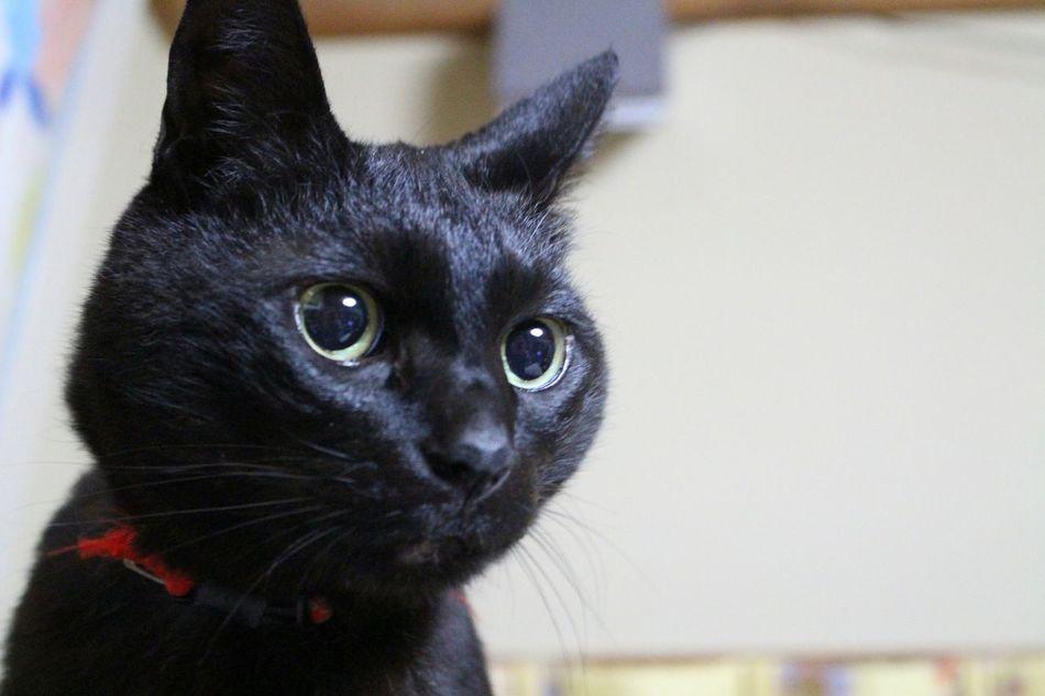 おはよう😃good morning😋 Cat Cats Cat Lovers BLackCat Black Cat お写ん歩Day! 黒猫Love