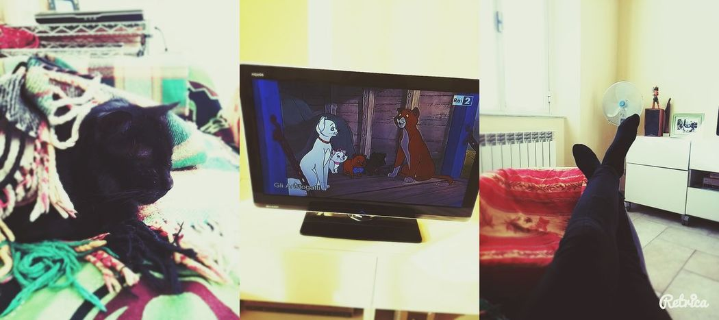 Cats Aristocats Catseverywhere  Cats Everywhere Black Cat Home Sweet Home Relaxing
