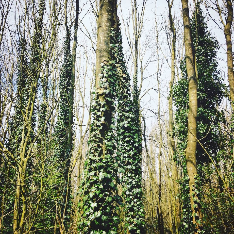 Green Forrest Green Forrest Nature Tree