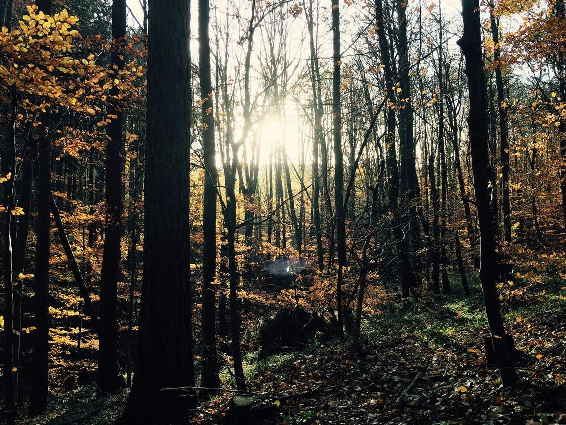 Autumn Colors The EyeEm Facebook Cover Challenge My Best Photo 2014