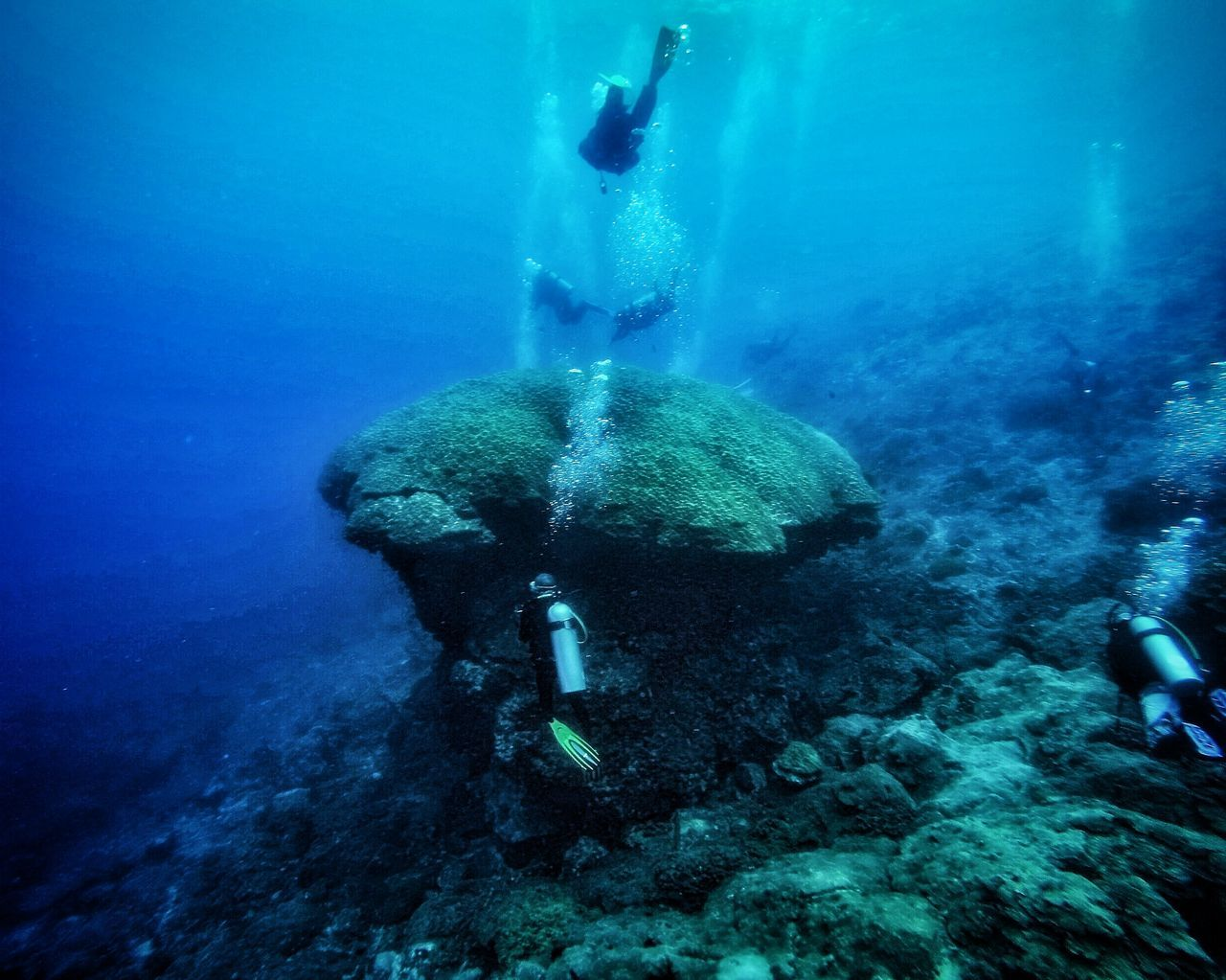 Underwater Water UnderSea Wildlife Blue Sea Life Sea Underwater Diving Gopro Malaysia Visitmalaysia Terengganu Island Divingphotography Diving Scubadiving Marine Life Nature Coral Reef UnderSea Fish Terengganu