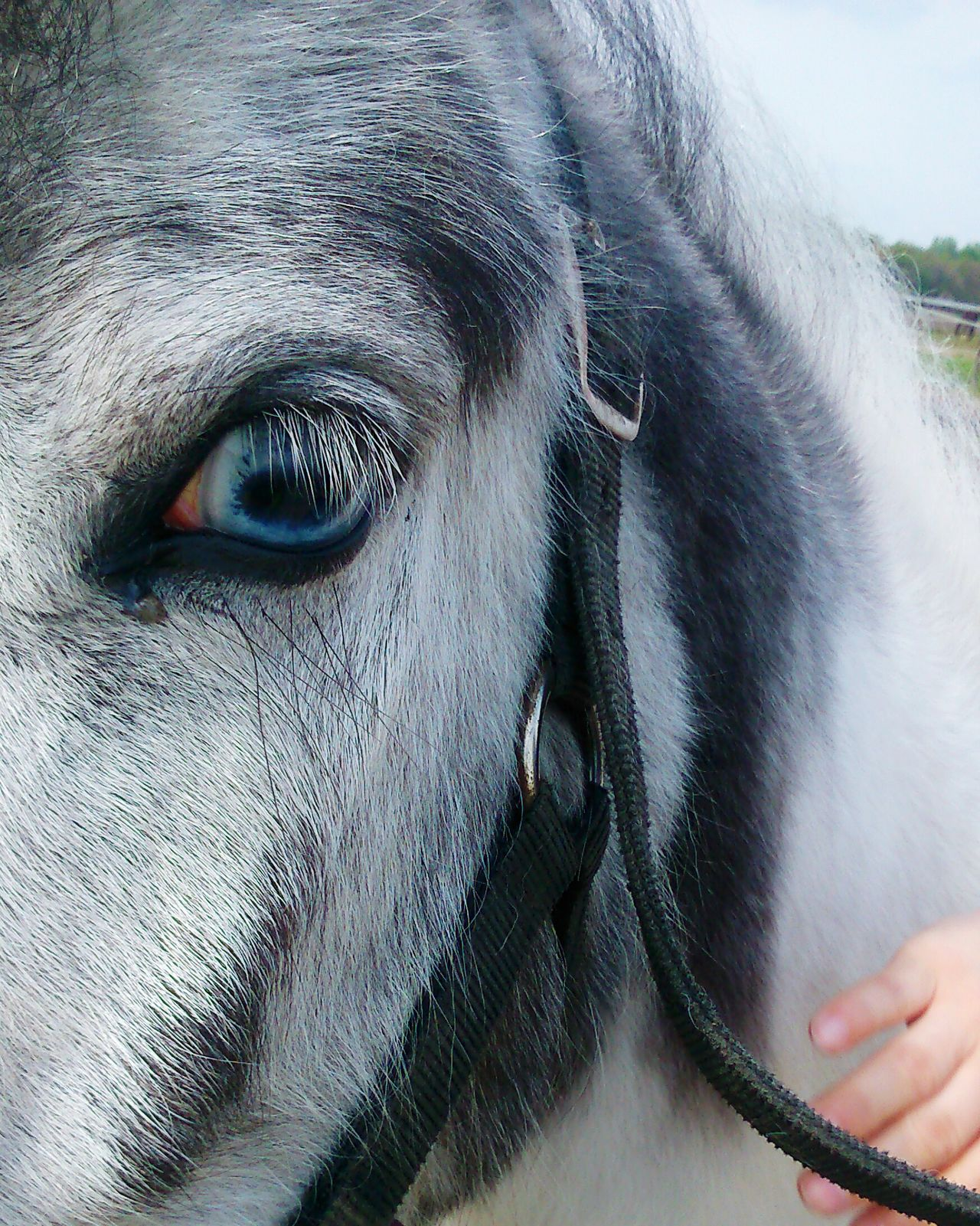 Horse Horses Horse Riding Blue Eyes I Love Horses Grey White Animals Animal Animal Themes Animal Love Nature My Best Photo 2015 New Years Resolutions 2016