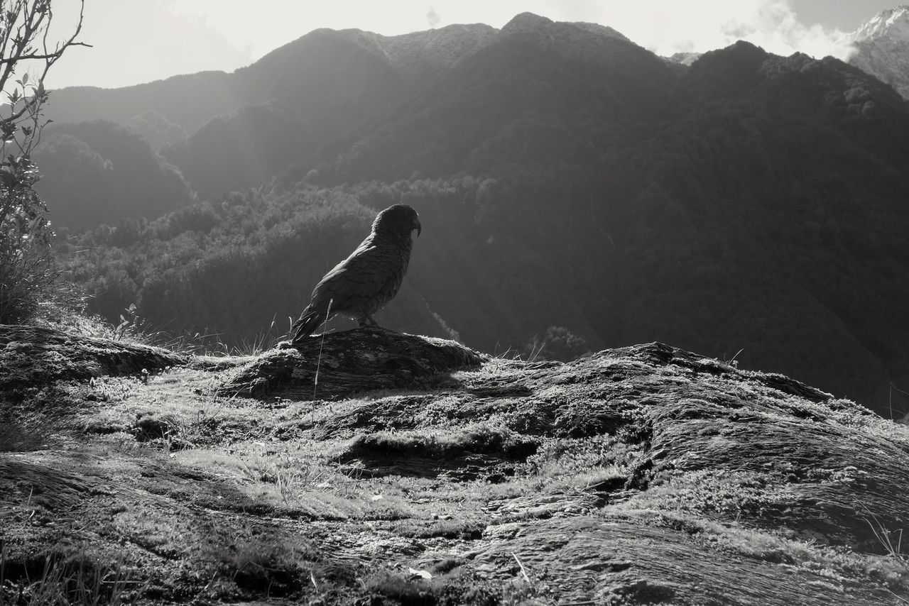 mountain, animals in the wild, one animal, animal themes, nature, bird, day, animal wildlife, outdoors, beauty in nature, no people, water, scenics, perching