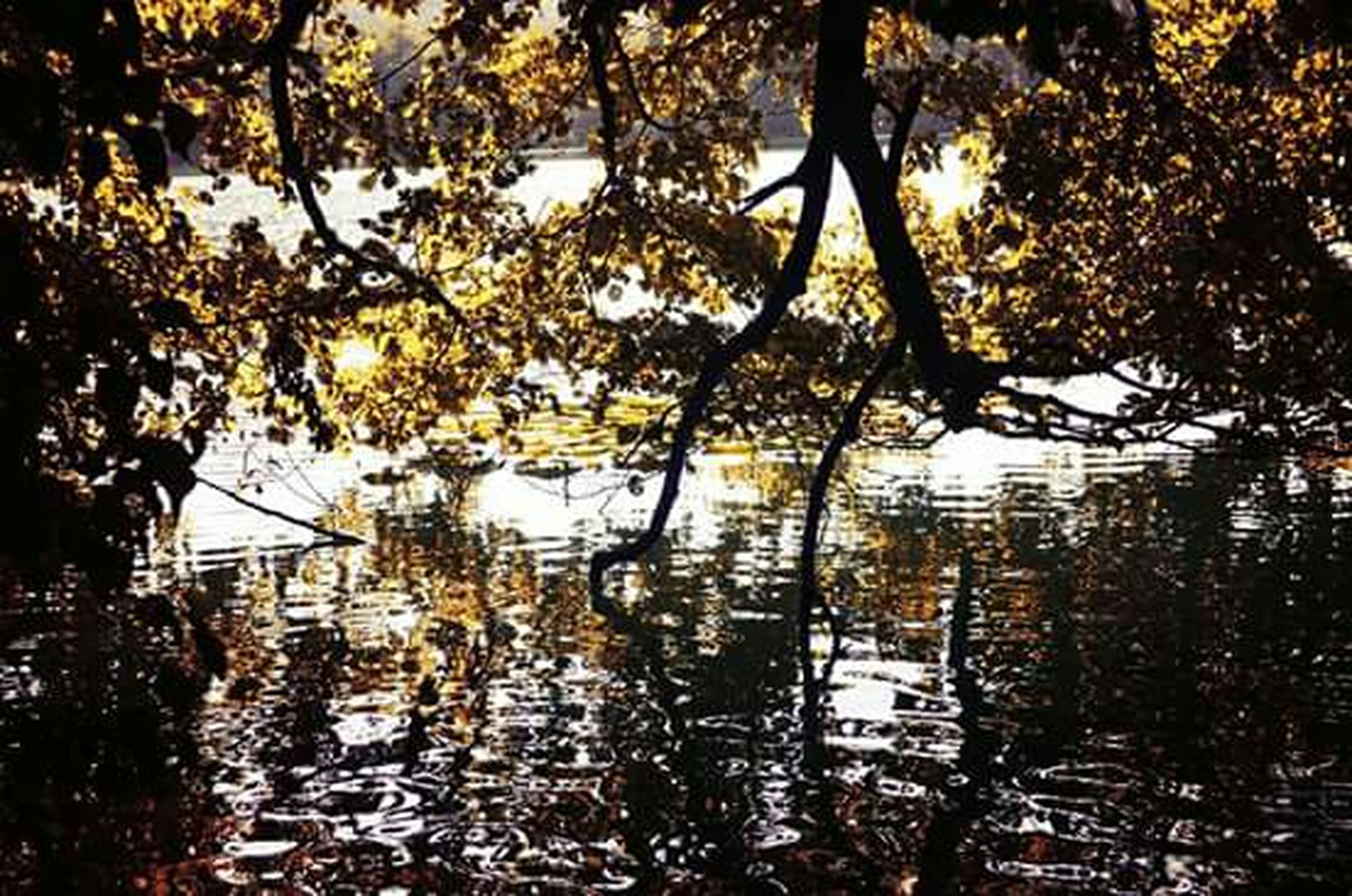 tree, branch, growth, leaf, water, nature, tranquility, autumn, beauty in nature, tree trunk, season, sunlight, reflection, outdoors, tranquil scene, no people, scenics, day, change, lake