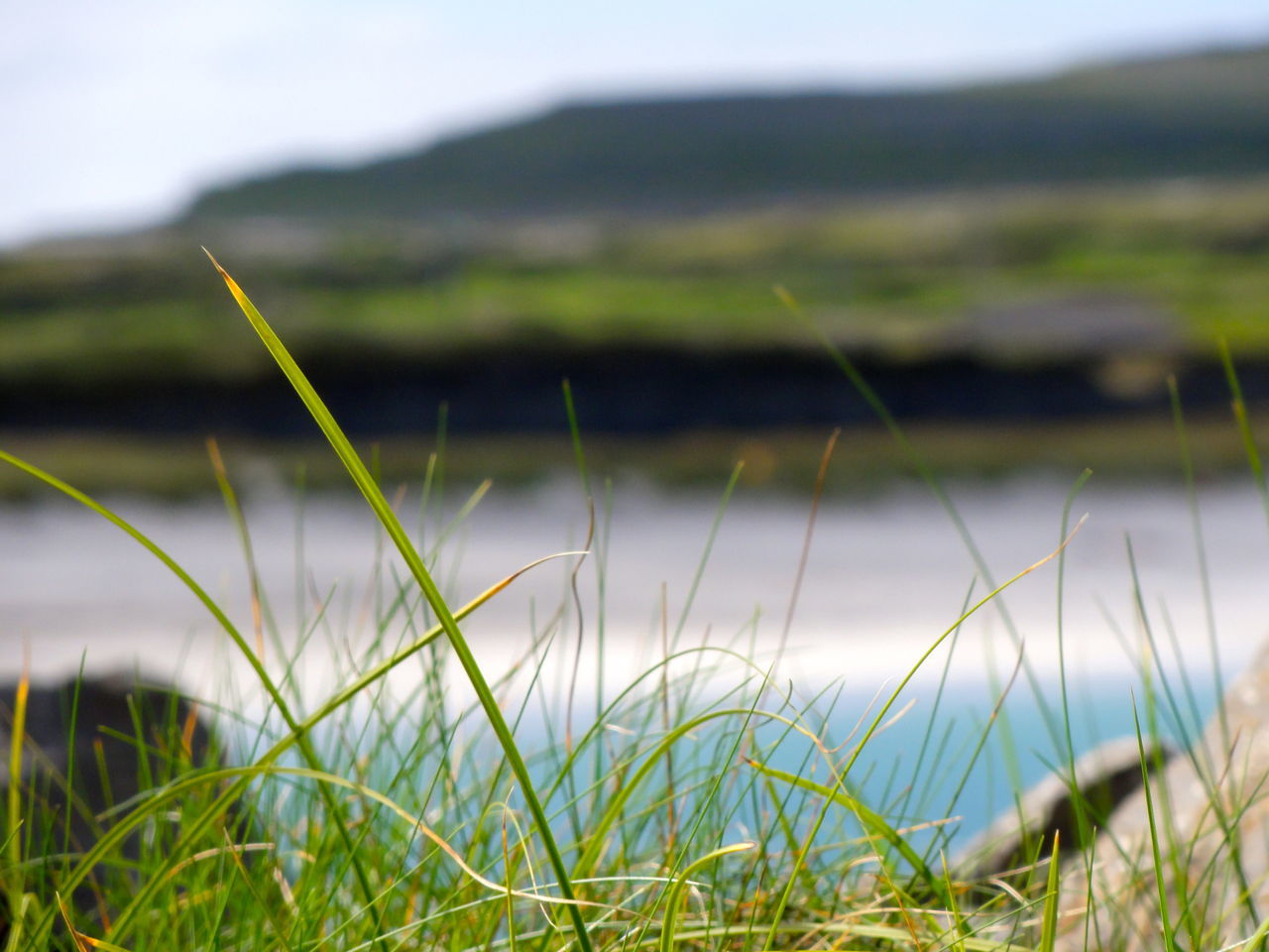 Beach Beauty In Nature Blue Water Cat Close-up Focus On Foreground Grass Green Color Growth Ireland Landscape Moycullen Nature No People Peacfull Plant Selective Focus Stem Suuny Day The Atlantic Ocean The Place To Be Landscape With Whitewall
