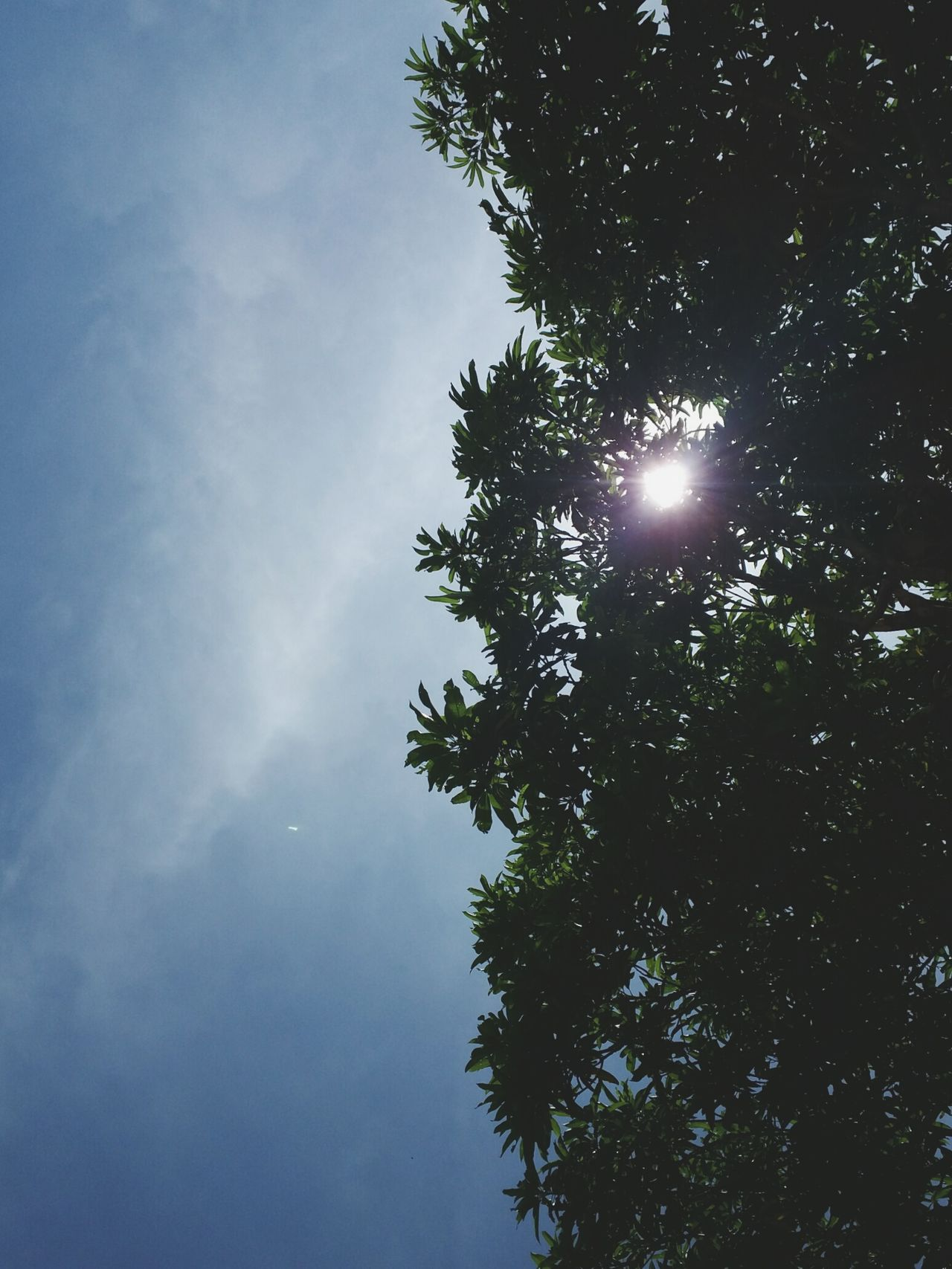 Half of everything. Tree Low Angle View Sun Growth Sunlight Beauty In Nature Scenics Sunbeam Tranquility Sky Tranquil Scene Nature Back Lit Sunny Glowing Branch Blue Lens Flare Outline Day Eyeem Philippines Eyeem Nature Sunny Nature Green Color