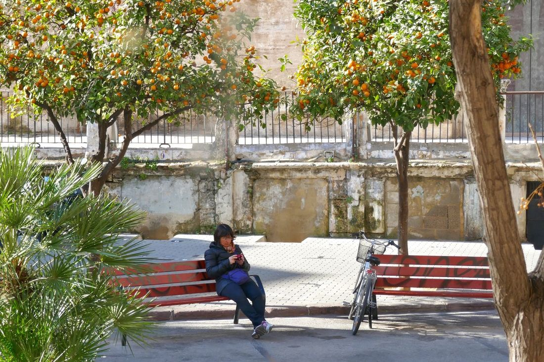 Adapted To The City Orange Trees Oranges Orange Tree Woman Sitting On Bench Benches Two Benches Tree Trees In The City Real People Built Structure Architecture Leisure Activity One Person One Woman Only People Lifestyles Outdoors Travel Destinations Citylife