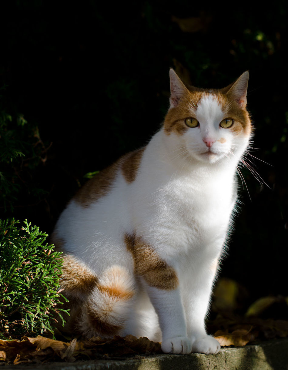 Animal Themes Day Domestic Animals Domestic Cat Feline Looking At Camera Mammal No People One Animal Outdoors Pets Portrait
