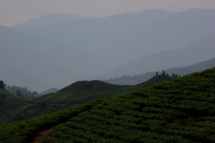 Beauty In Nature Day Fog Green Color Growth Kanyan, Ilam Landscape Mountain Mountain Range Nature No People Outdoors PhotoNepal Scenics Sky Tea Crop Tea State Tranquil Scene Tranquility Breathing Space Lost In The Landscape