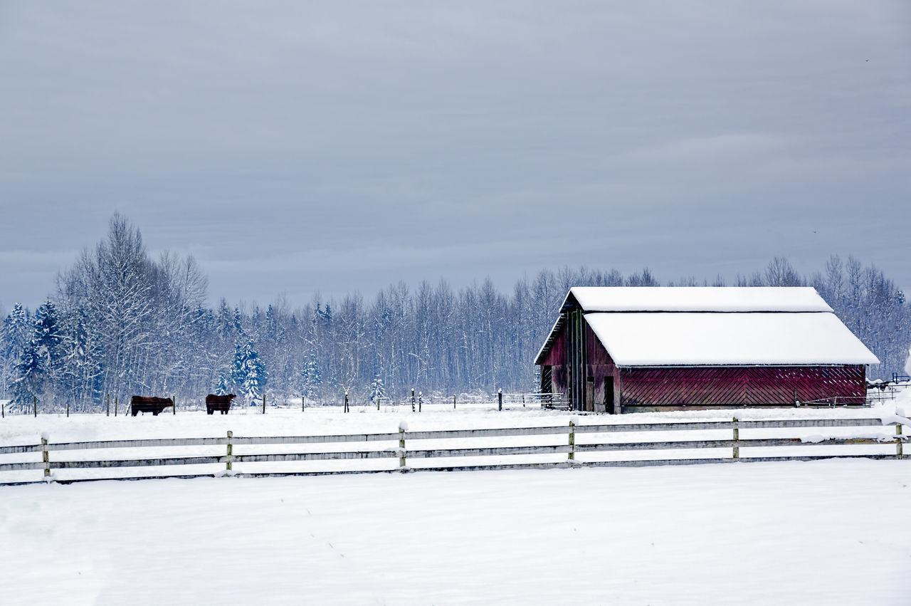 Architecture Barn Building Exterior Built Structure Cold Temperature Day Farm Frozen Nature No People Outdoors Sky Snow Snowing Tree White Color Winter Wood - Material
