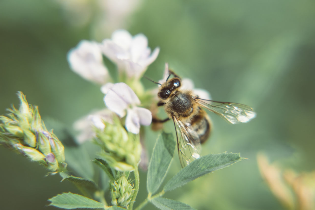 one animal, insect, animal themes, animals in the wild, nature, plant, animal wildlife, no people, growth, day, close-up, outdoors, fragility, flower, beauty in nature, bee, freshness