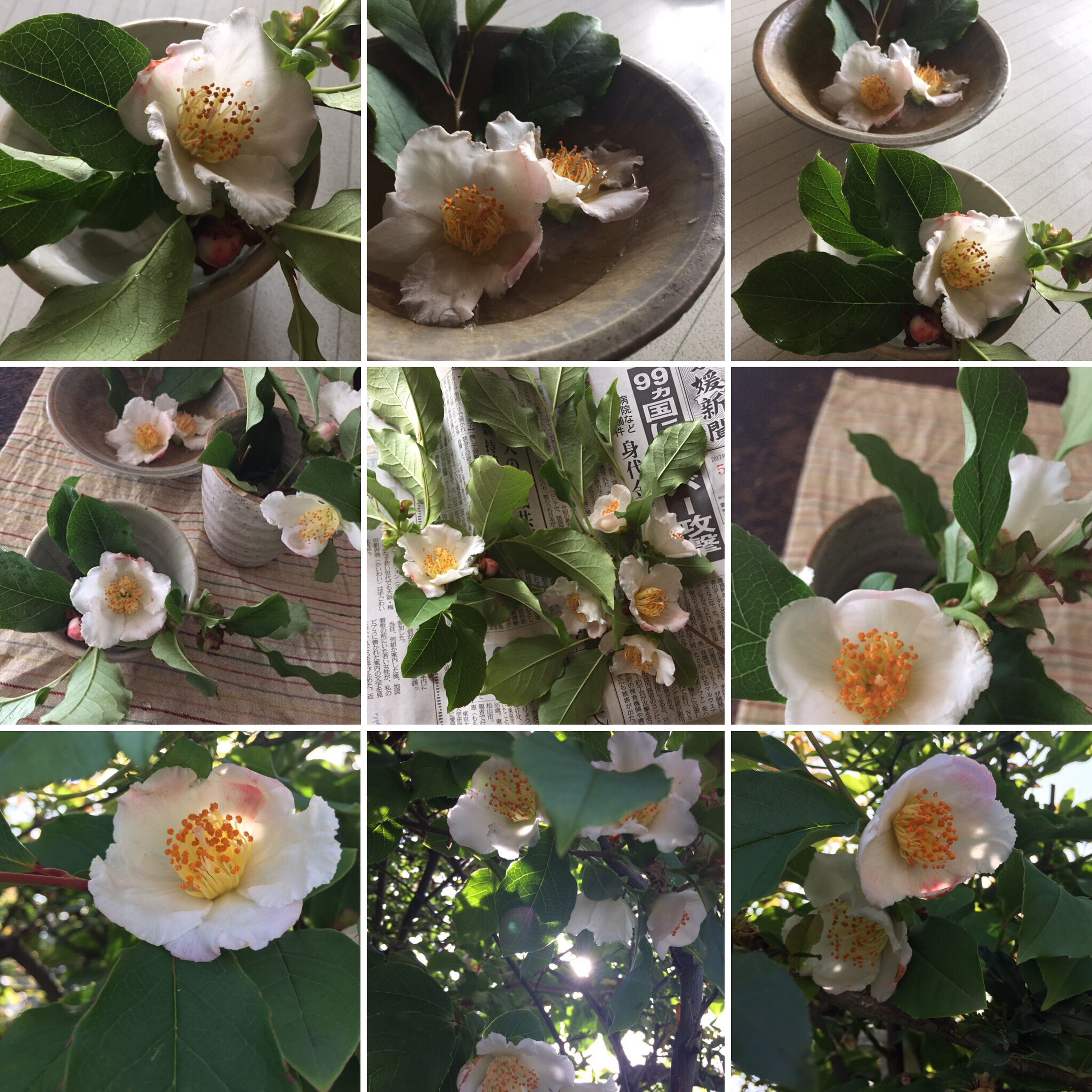 flower, freshness, collage, no people, food and drink, food, indoors, nature, multiple image, close-up, day, flower head