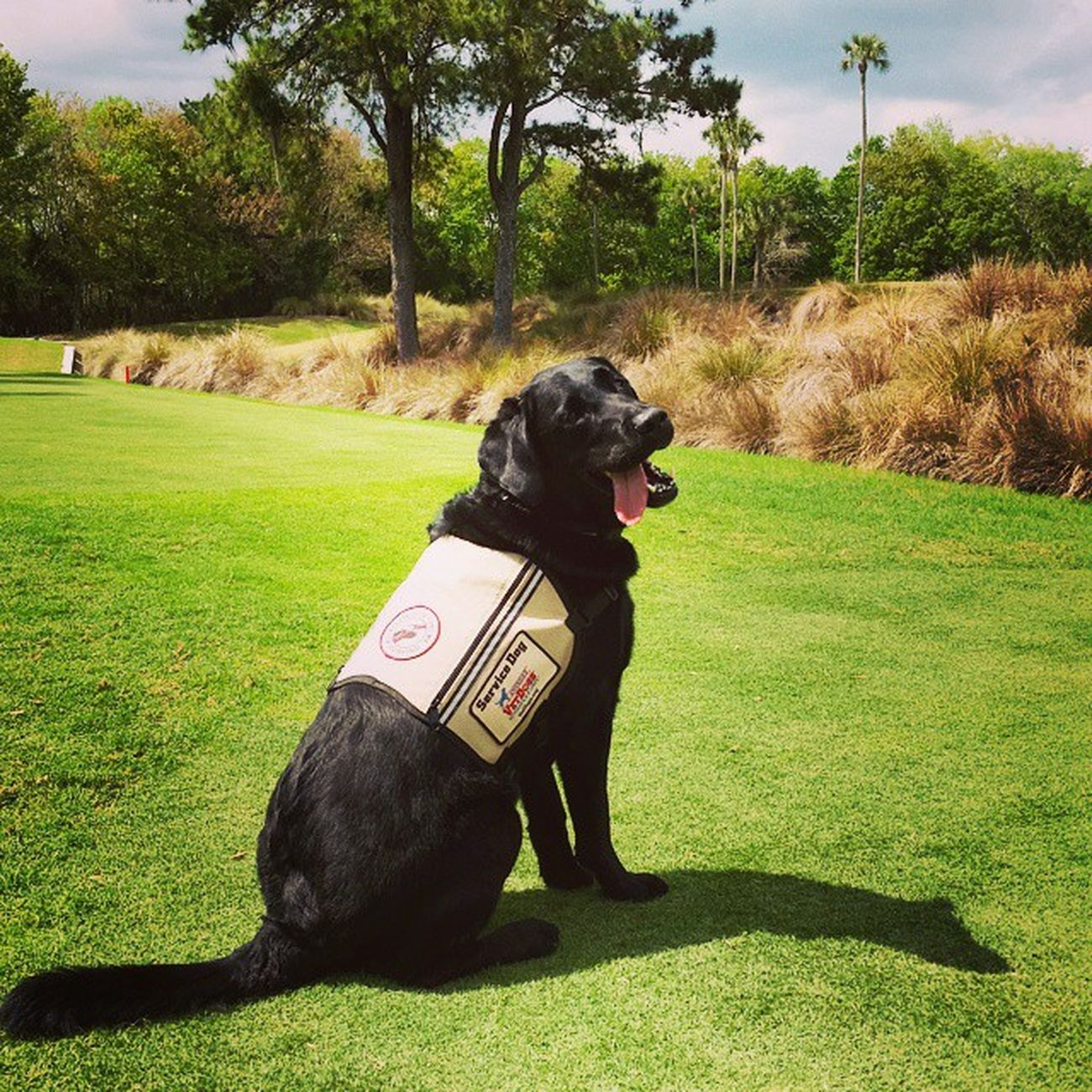 This is Winchester. A Woundedwarriorproject service dog whom greeted us at one of the tee boxes. The 3 veterans and participants of Wwp were just absolutely amazing and inspiring! Thank you for bravery, courage, your service and the rays of light you shined on us today for a short time on the golf course. Awesome TimTebowFoundation WeAllWantedToBringWinchesterHome