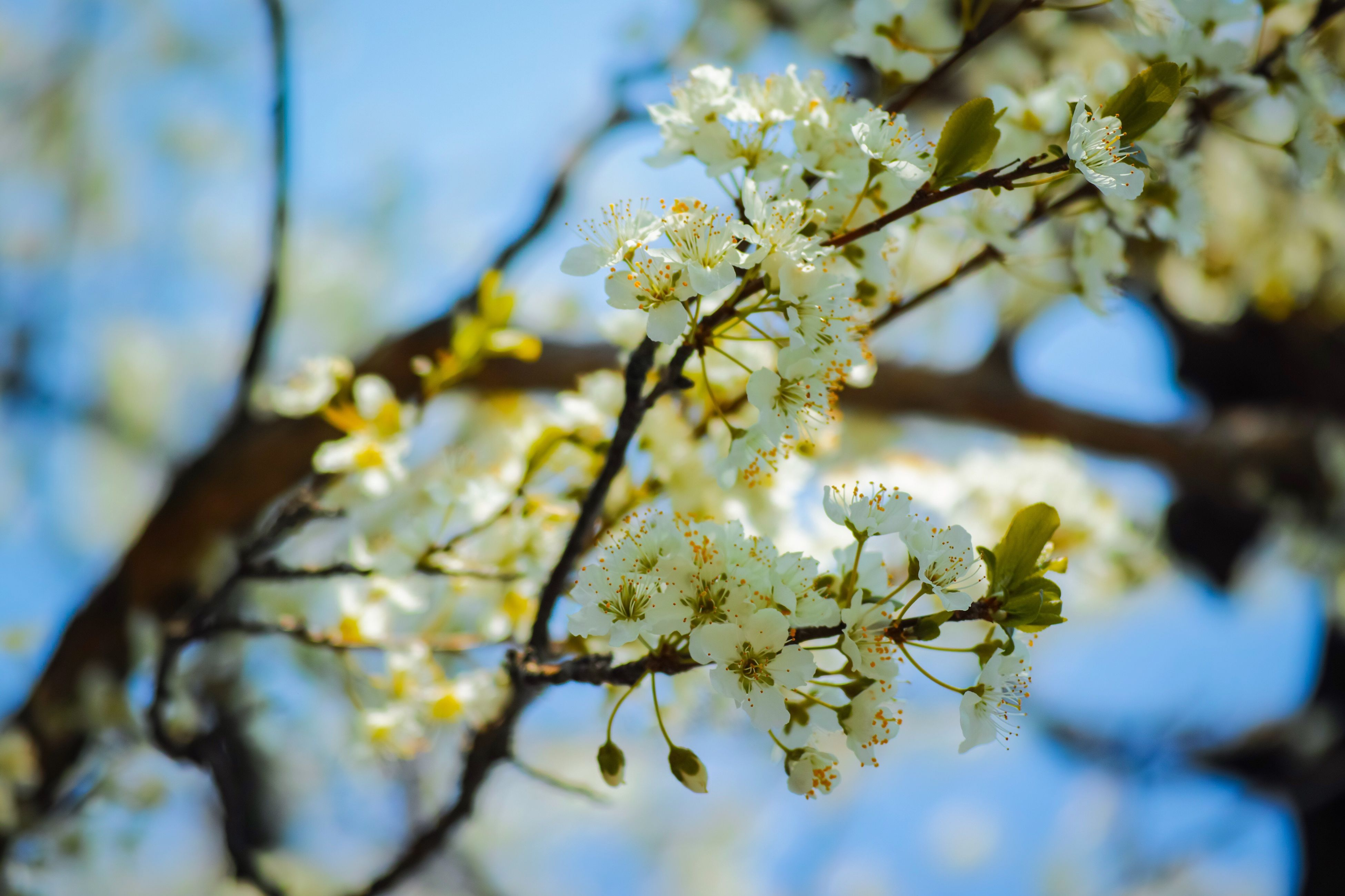 nature, beauty in nature, growth, flower, fragility, branch, freshness, low angle view, close-up, no people, tree, springtime, blossom, outdoors, sunlight, day, sky
