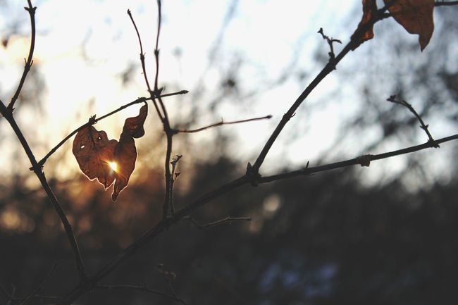 A time where nature bared its soul, chilling us to the bones and teased us with gentle kiss of the sun. Nature EyeEm Best Shots Tadaa Community EyeEm Bokeh