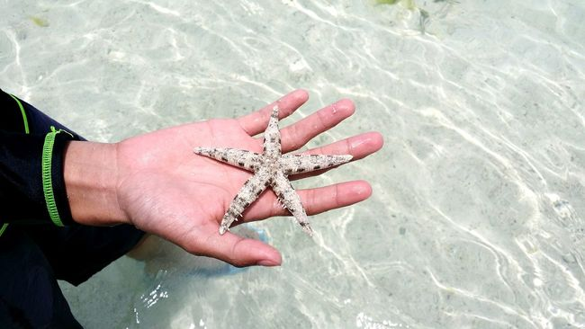 Person Part Of High Angle View Human Finger Sea Starfish At Beach Starfish