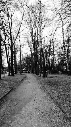 Walking the dog on the road Black & White Walk This Way Eeyemgallery Monchrome City Street Atmospheric Scene Poland 💗 Ambience Climate Change Slinence In Heavan At The Park Atmosphere Light In The Park Park View Black Background