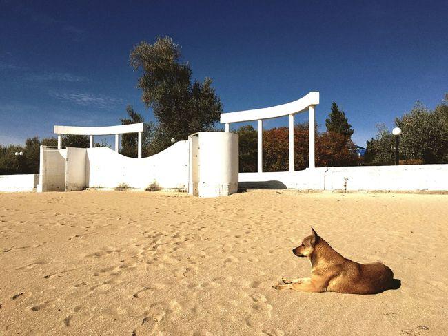 Pets Dog Sea Evpatoria