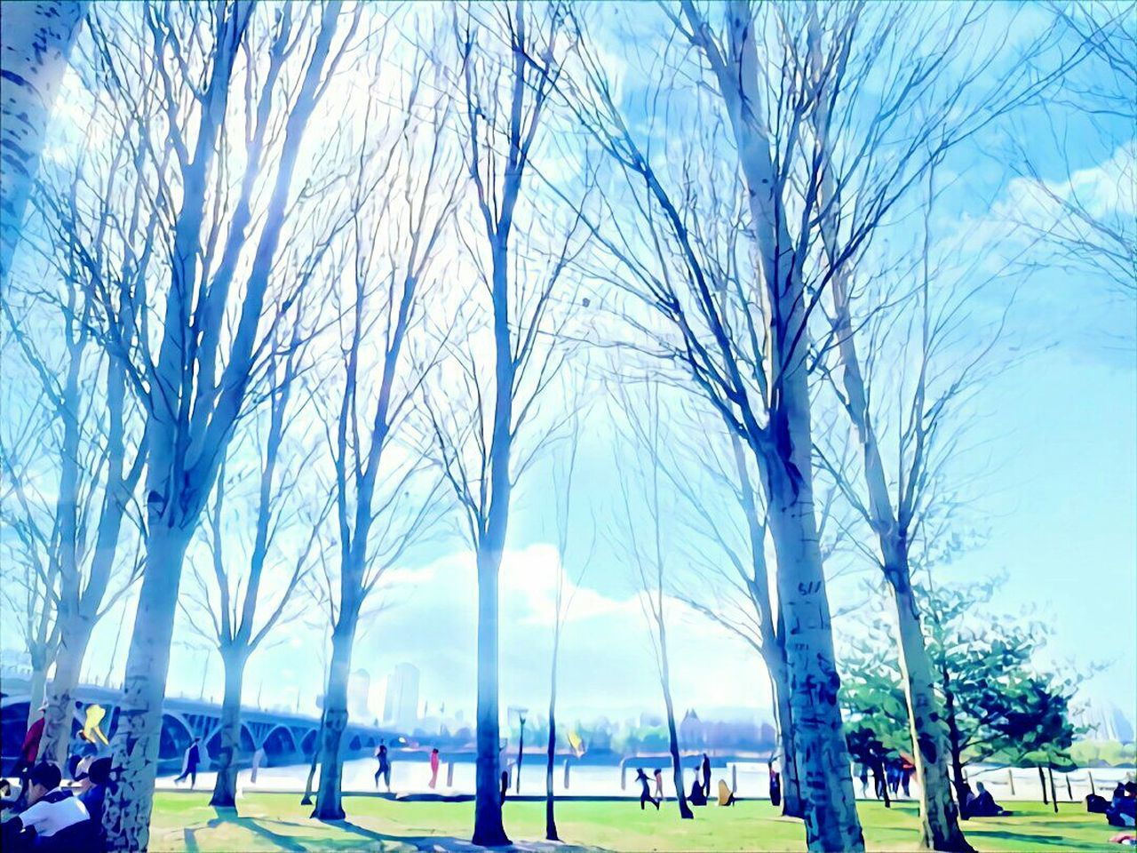 tree, bare tree, branch, park - man made space, sky, day, group of people, outdoors, people, city, grass, nature