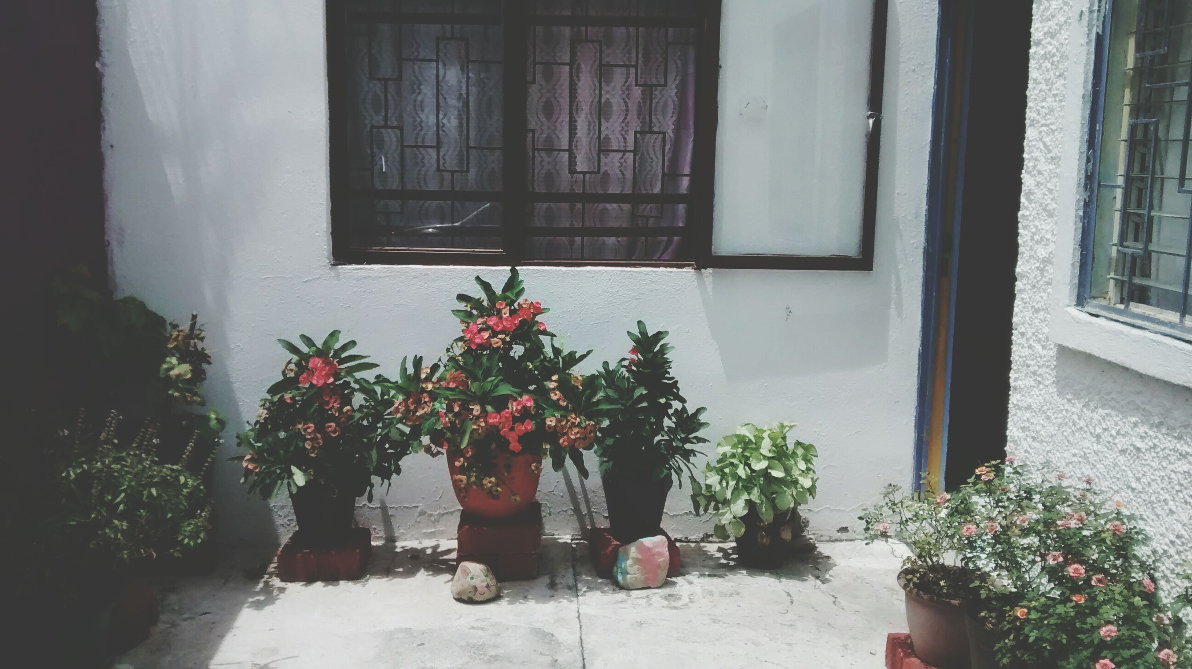 window, building exterior, architecture, potted plant, flower, built structure, plant, growth, house, door, flower pot, window sill, closed, red, residential structure, front or back yard, day, pot plant, freshness, glass - material