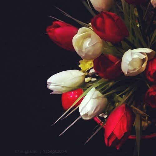 Flowers Lumia 1520 12Sept2014