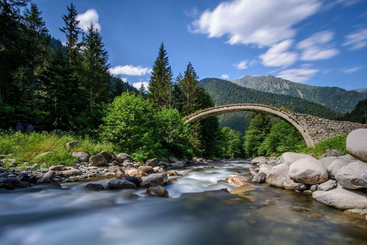 Beautiful stock photos of bridge, Beauty In Nature, Bridge, Day, Forest