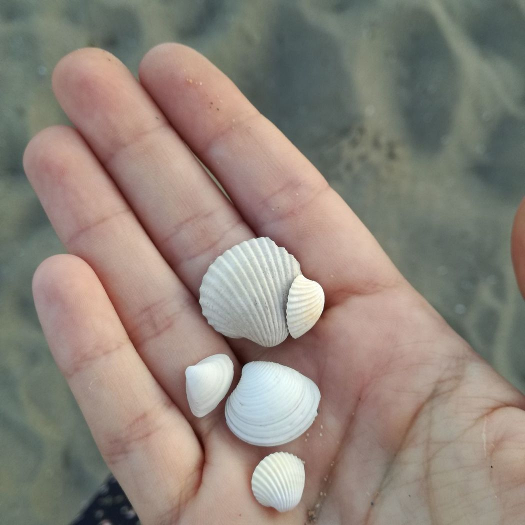 Shells Shell Shells Beach Beachphotography Beach Walk Neretva Neretva River Usce Usceneretve Ploce Rivermeetssea Croatiafulloflife Croatiawithlove Vacations Croatia Sand Close-up