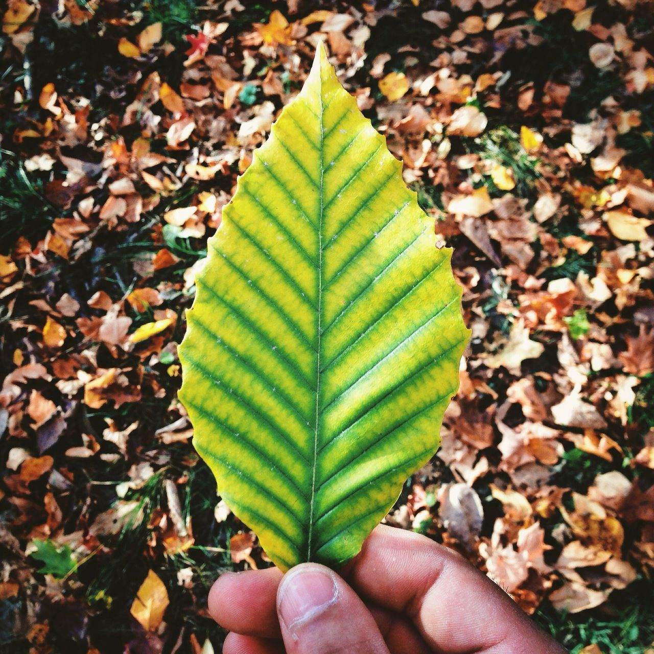 Beautiful stock photos of leaf, Autumn, Beauty In Nature, Boston, Day