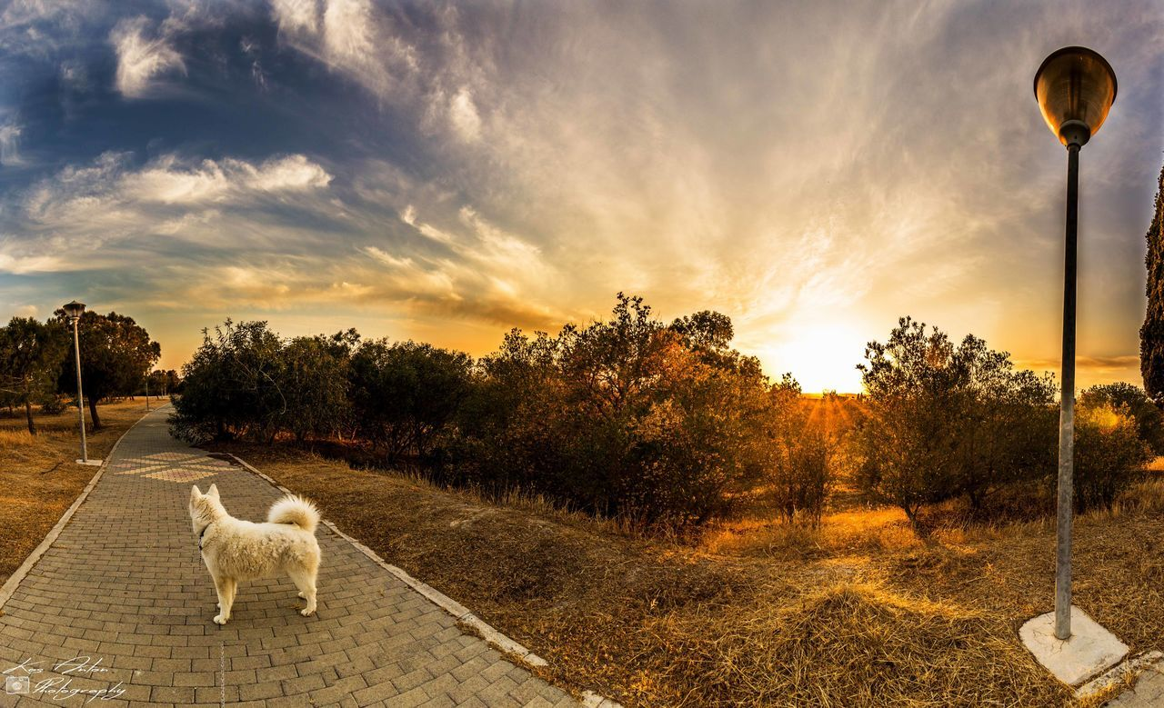 sunset, tree, domestic animals, animal themes, cloud - sky, dog, sky, road, outdoors, nature, mammal, one animal, no people, pets, day, beauty in nature