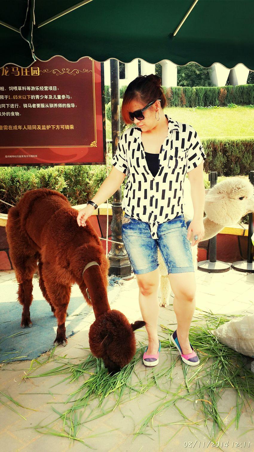 ...gigantic poodle...mini camel... =LLAMA ??? Hanging Out Enjoying The Sun Enjoying Life Relaxing