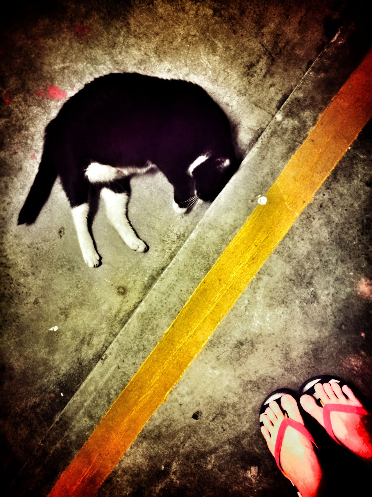 She always sent me back to home.Domestic Animals One Animal Yellow Pets Animal Themes Mammal Night Outdoor Photography Outdoors Homelessness  Homeless Kitten Homelessness  Homeless Homelessness  Homeless Cats Hua Wei P9 Plus Homelessness  Homeless Cat Animal Cat Homelessness  Homeless Animal Huaweiphotography Huawei P9 Plus HuaweiP9