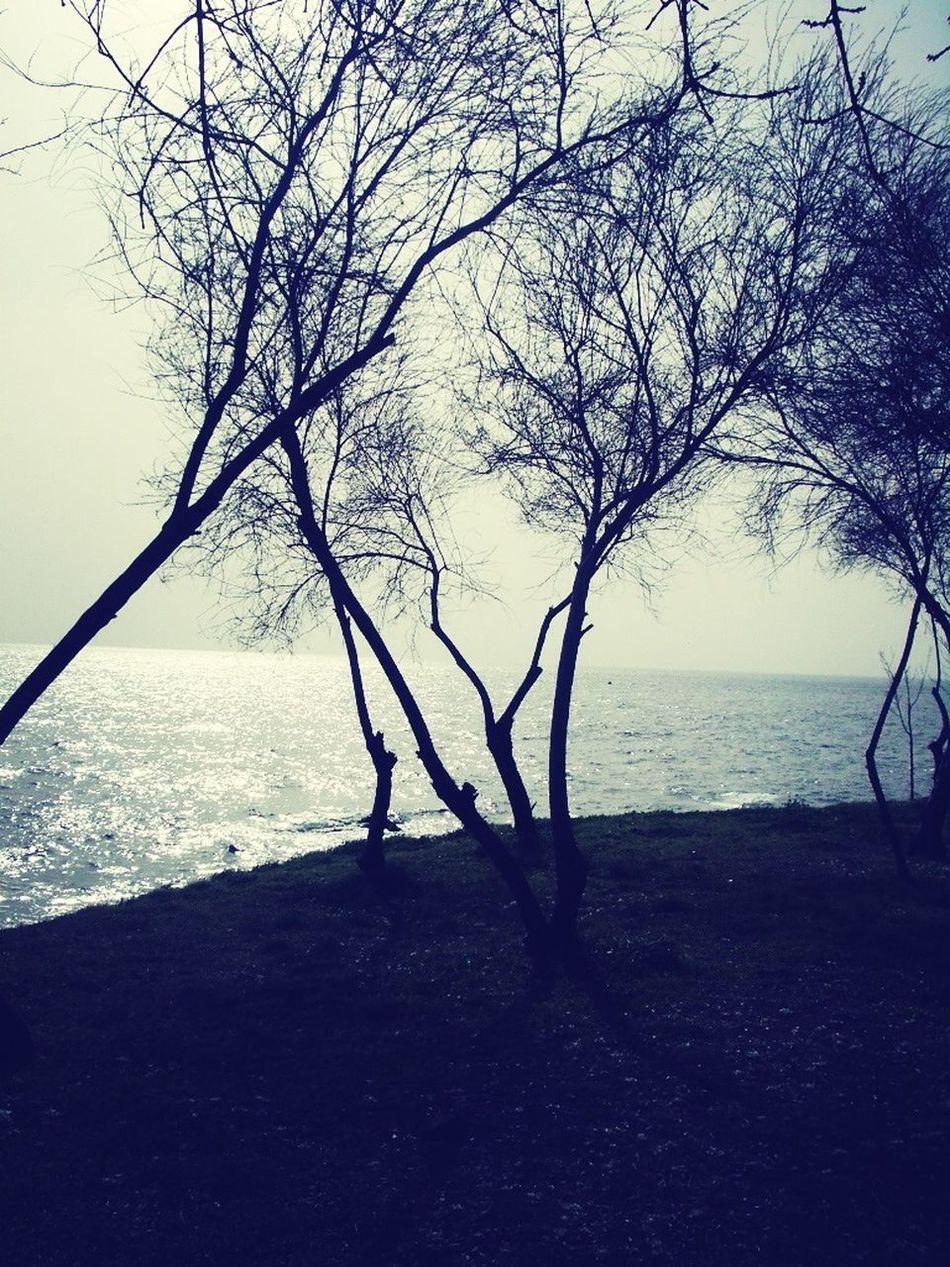 Autumn Loneliness