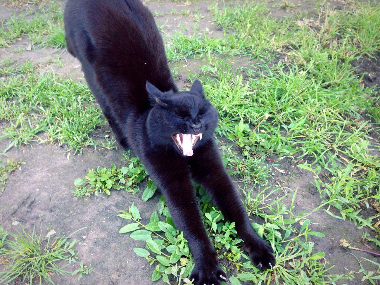 Коты кот котэ Homeless Cats Cats Cat♡ Cat