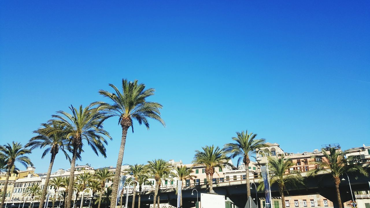 Palm Tree Blue Travel Tree Clear Sky Outdoors No People Sky Day Italia Italy Beauty In Nature Travelphotography Tourist Destination Travel Travel Photography Travel Destinations City Traveling Nature Genova