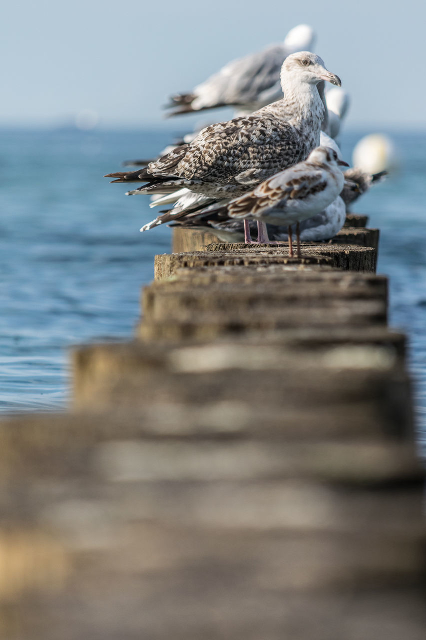 bird, animals in the wild, animal themes, animal wildlife, perching, selective focus, nature, no people, wood - material, day, outdoors, sea, water, close-up